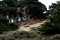 Golden Gate Park Trees_5659