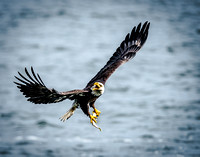 Eagle's Fresh Catch_1737-2
