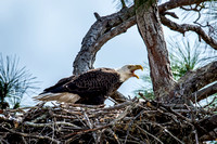 Protecting this Nest_6815