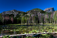 Nymph_Lake_Colorado_Rocky_Mountain_National_Park (1 of 4)