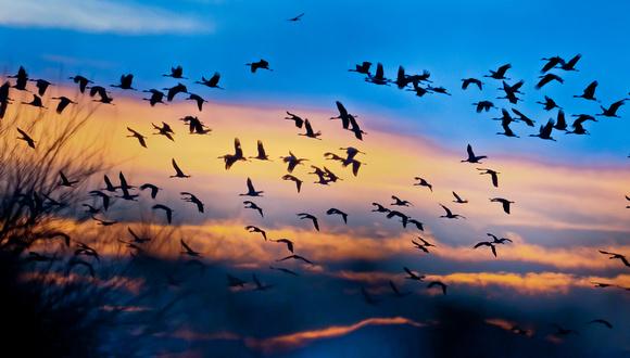 It Was Twilight And Sandhill Cranes >> C Sharper Photography Ecotourism Sandhill Crane Migration On The