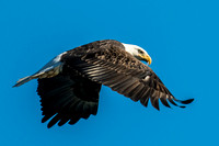Eagle Flyby_8022